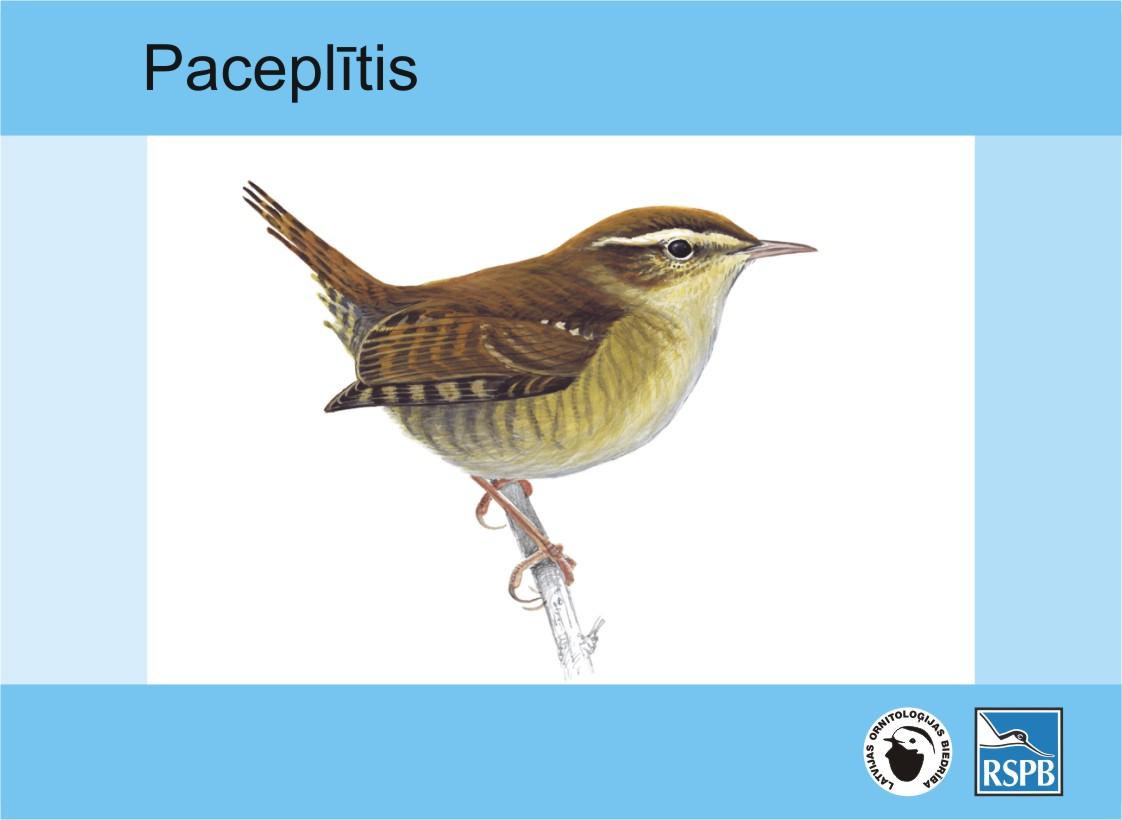 paceplitis