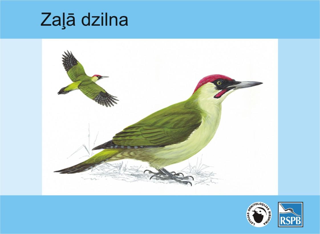 zala_dzilna