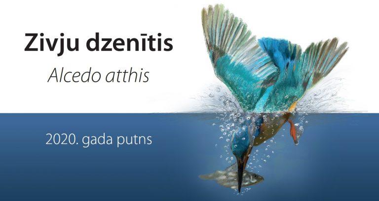 Zivju dzenītis - 2020. gada putns